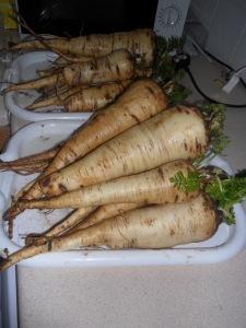 My parsnips