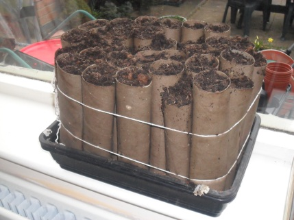Image result for growing veg seeds in cardboard tubes and boxes