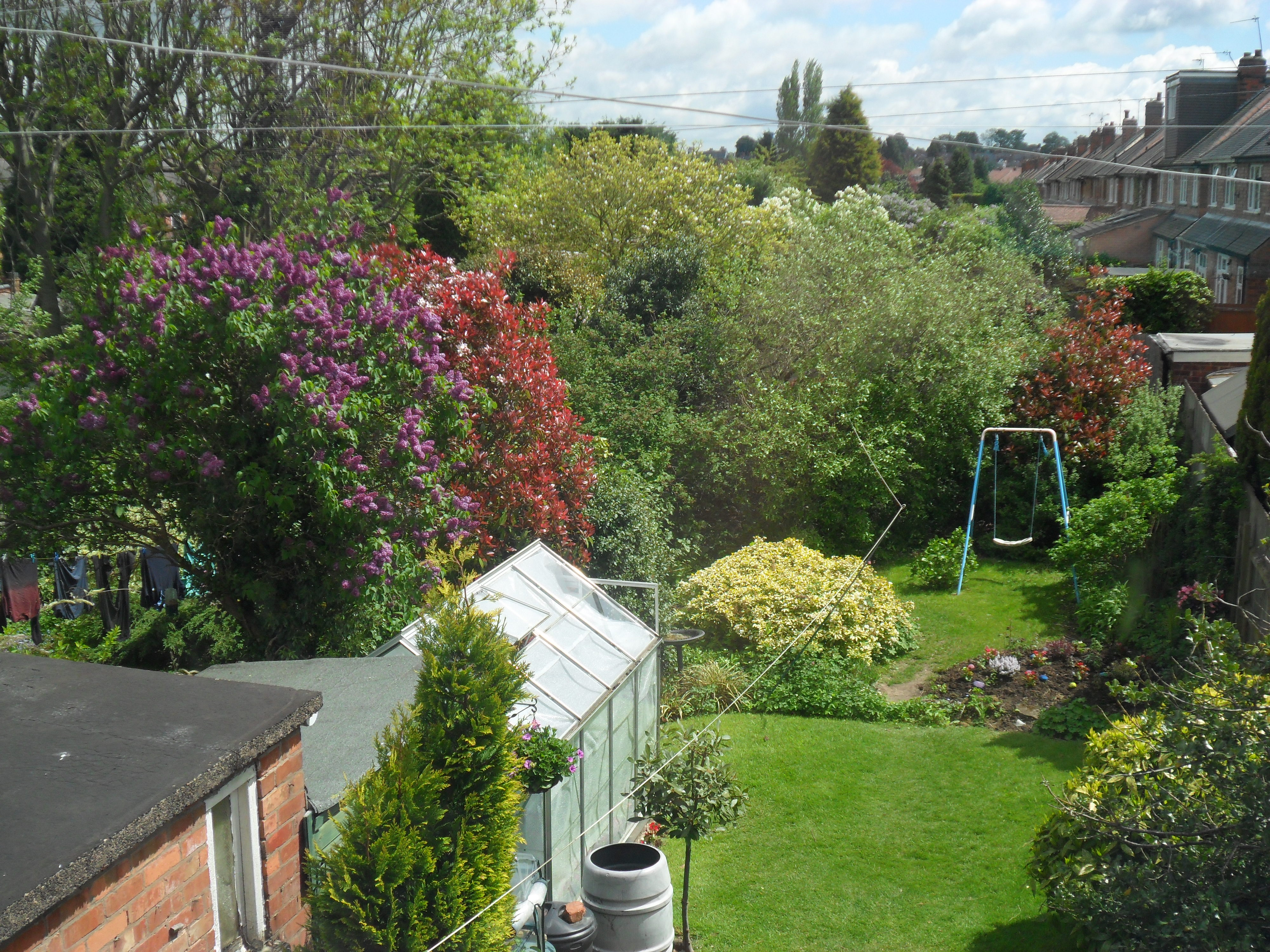 My Back Garden And My Allotment Too Not Just Greenfingers