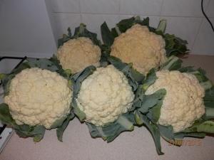 I'm very proud of my cauliflowers