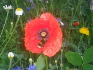 My Wildflower Patch