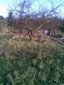 January 2012 when I took my fourth plot