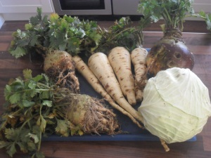 Parsnips, celeriac, cabbage and swede from my allotment this week.