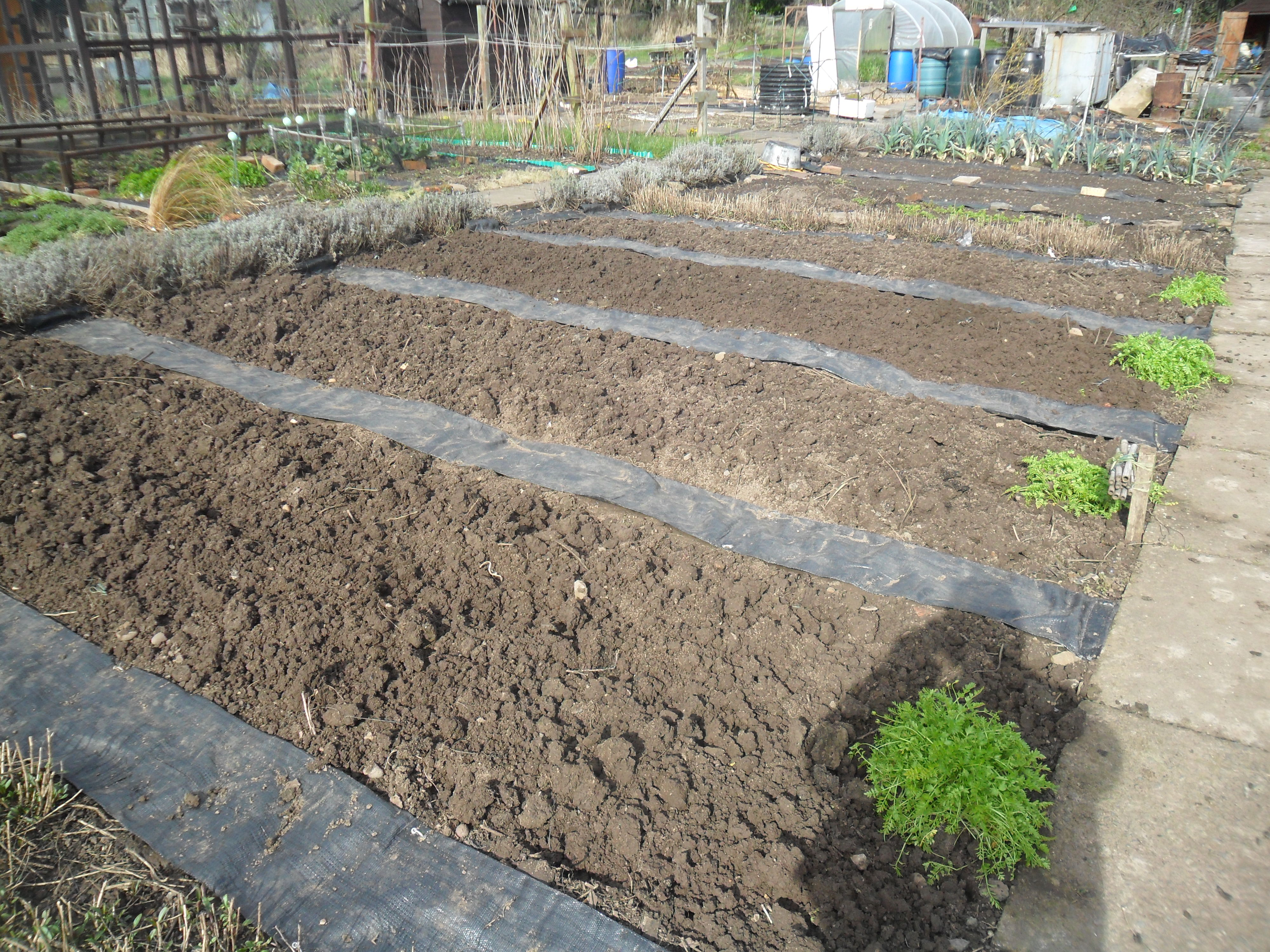 Allotment paths | not just greenfingers