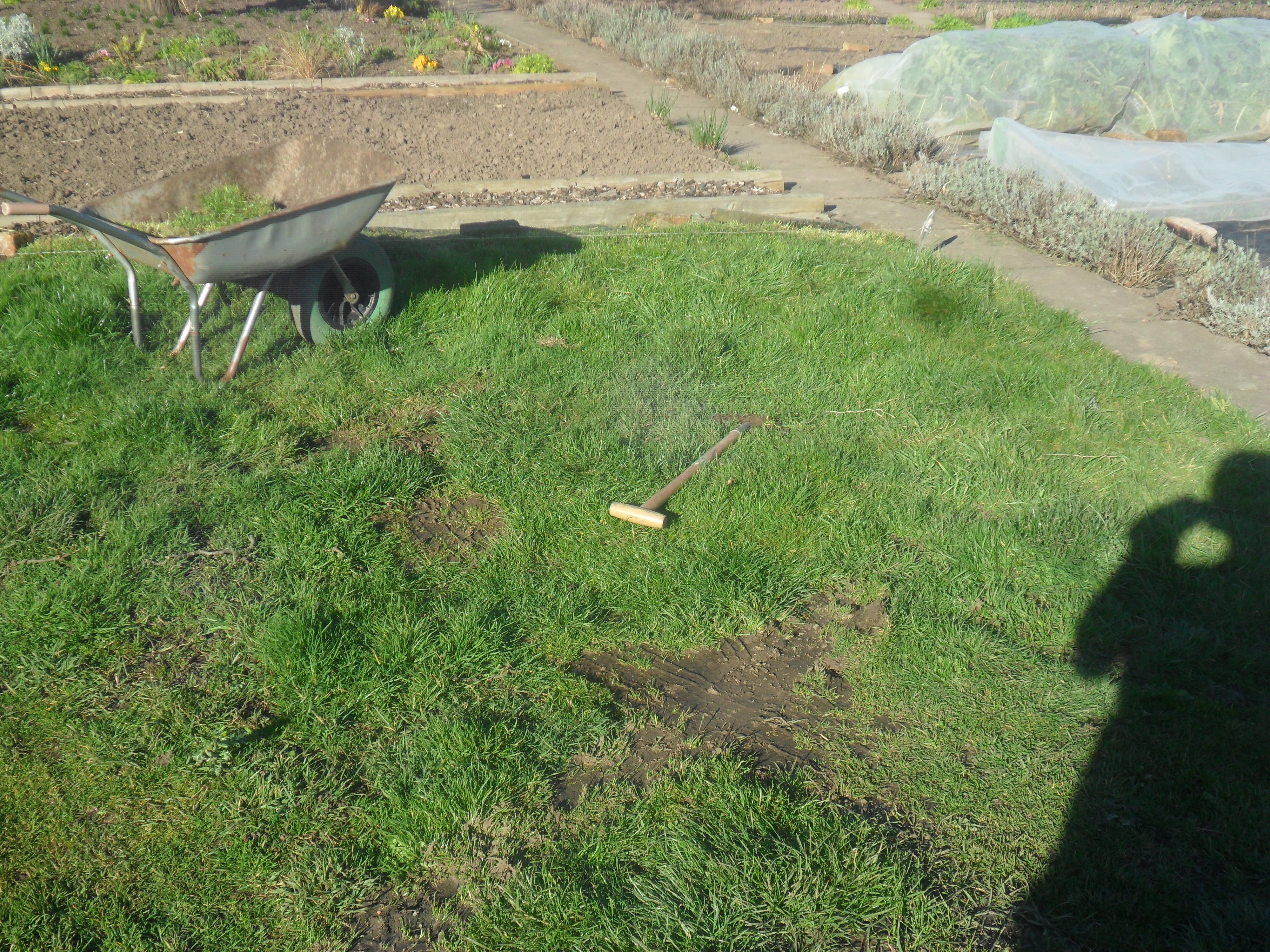 Grass Couch Weed Suppressant To Stop Couch Grass Not Just Greenfingers