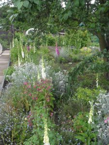 My woodland garden this week