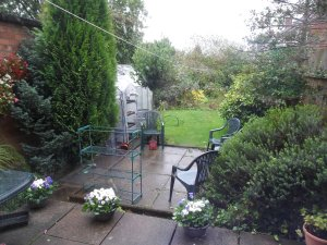 My wet and windy back garden this week