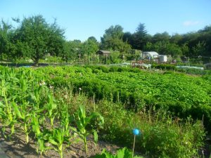 My old allotment plots