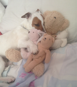 A 'cheeky girl' found cuddling my daughters teddies