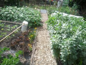 My New Kitchen Garden