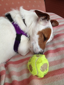 Judy asleep with her ball