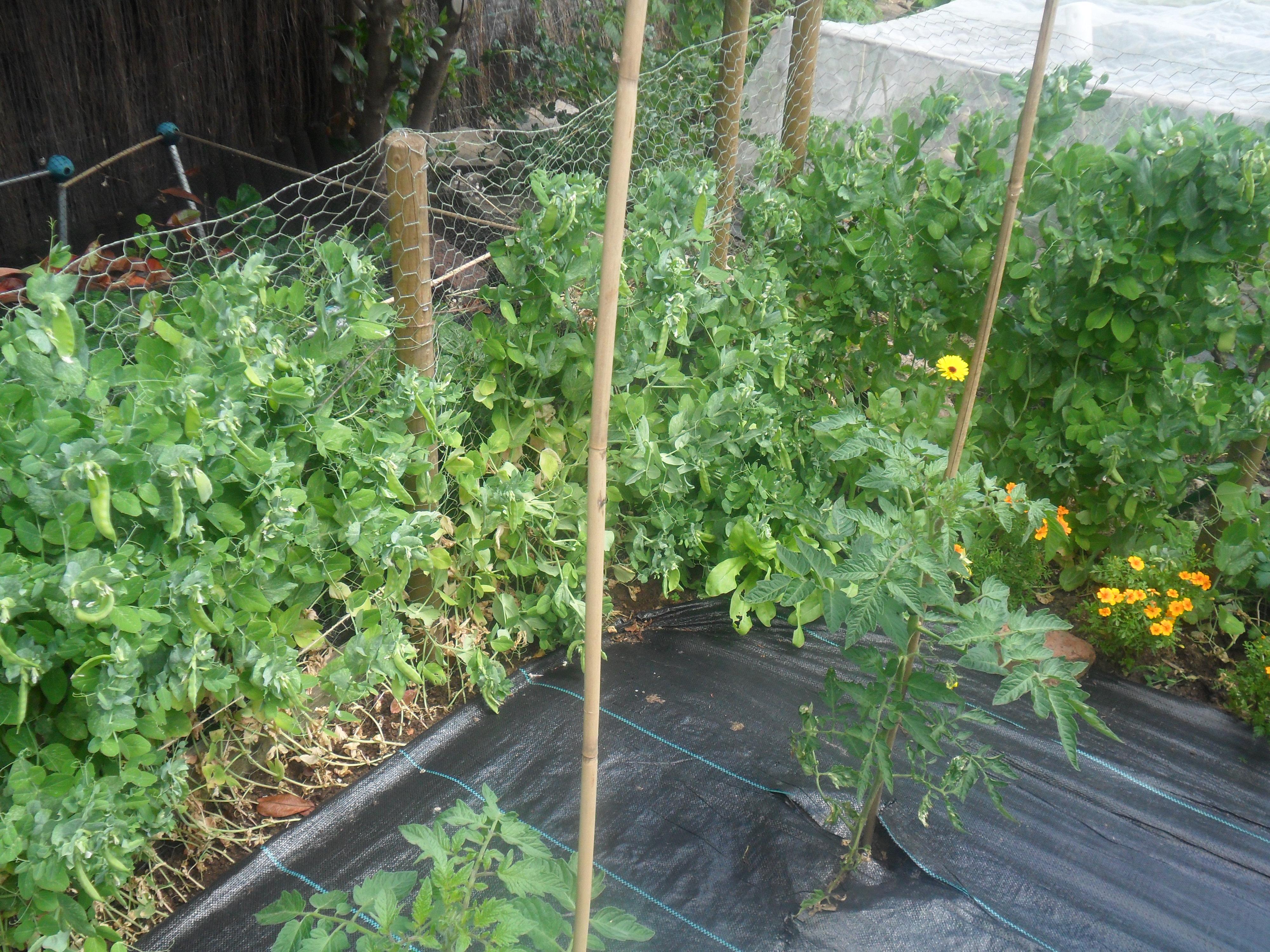 how to make organic pesticide