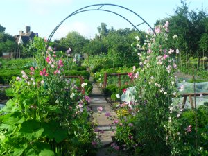 My old allotment